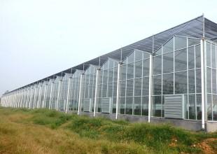 9月底10初蔬菜大棚种植管理注意事项
