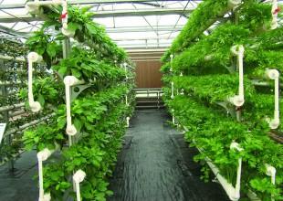 无土栽培技术的要求及条件